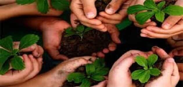 بحث عن يوم البيئة العالمي