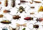 تفسير حلم الحشرات للعزباء