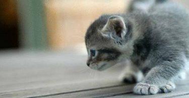 تفسير حلم القطط في الحلم