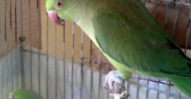 تفسير حلم طير لونه أخضر