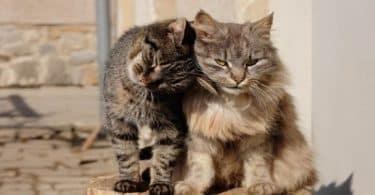 تفسير رؤية طرد القطط من البيت في المنام