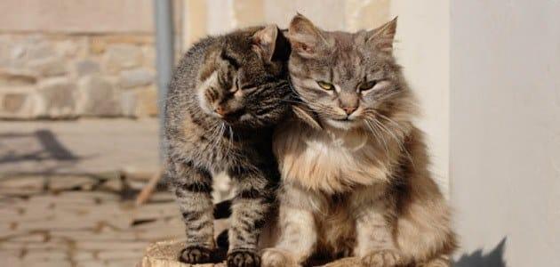 تفسير رؤية طرد القطط من البيت في المنام معلومة ثقافية