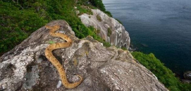 Brasilien Schlangeninsel