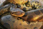 رؤية الثعبان في المنام وقتلة للعزباء