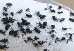 طريقة للتخلص من الذباب في المنزل