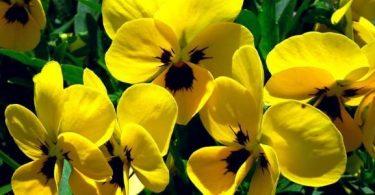 ماذا يعني اللون الأصفر ؟