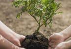 معلومات عن اسبوع الشجرة للأطفال