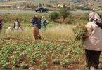 معلومات عن اليوم العالمي للمرأة الريفية