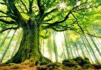 معلومات عن يوم الشجرة العالمي