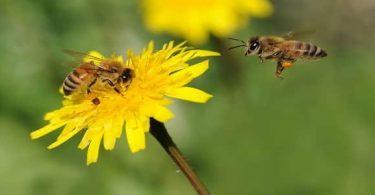 موضوع تعبير عن النحل للصف الرابع الابتدائى