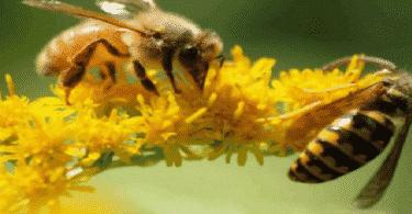 موضوع عن النحلة والزهرة