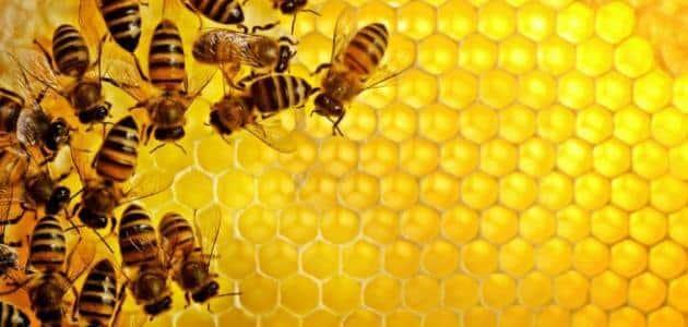 موضوع عن النحل قصير
