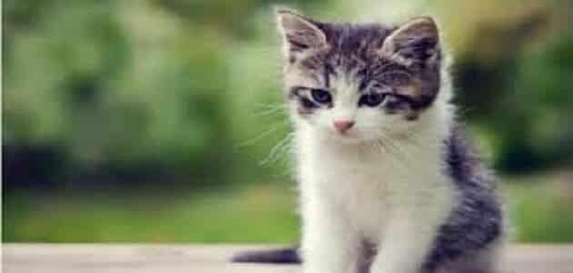 اسماء القطط بالعربية