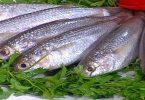 السمك البوري في المنام