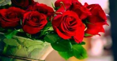 باقة الورد في المنام