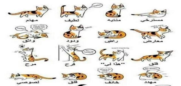تصرفات القطط ومعانيها ؟