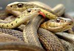 تفسير حلم الثعابين الكثيرة للمتزوجة