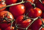 تفسير حلم الطماطم للعزباء