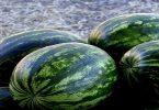 تفسير حلم رؤيا البطيخ الأخضر في المنام