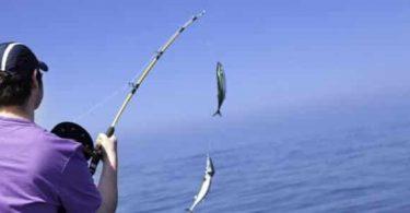 تفسير حلم صيد السمك للمتزوج وللعزباء وللمتزوجة