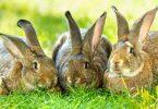 رؤية الأرنب في المنام للمتزوجة