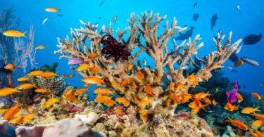 البحر الأحمر والشعب المرجانية
