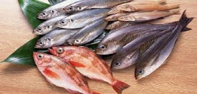 رؤية السمك النيء في المنام للعزباء والمتزوجة والرجل
