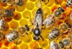 رؤية النحل في المنام للرجل المتزوج