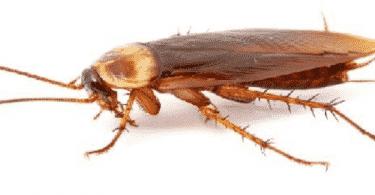 فوائد الصراصير في المنزل