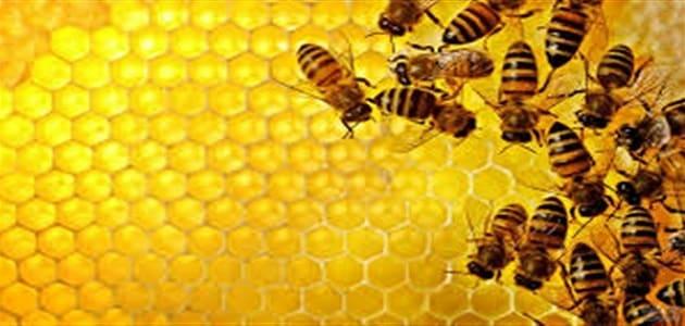 الفرق بين النمل والنحل في العمل