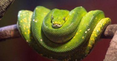 تفسير حلم الثعابين الخضراء الصغيرة