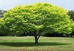 رؤية الشجر الأخضر في المنام للعزباء