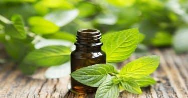 علاج الحساسية من المواد الكيميائية بالأعشاب