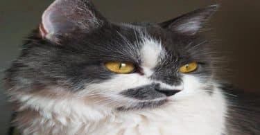 أسباب ظهور فراغات في شعر القطط