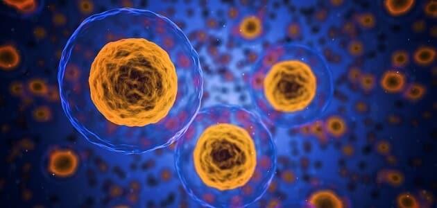 الفرق بين عمليتي البلعمة والاخراج الخلوي