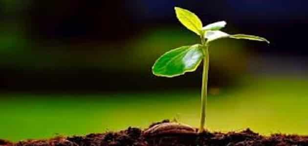 كيف تتكاثر النباتات اللابذرية