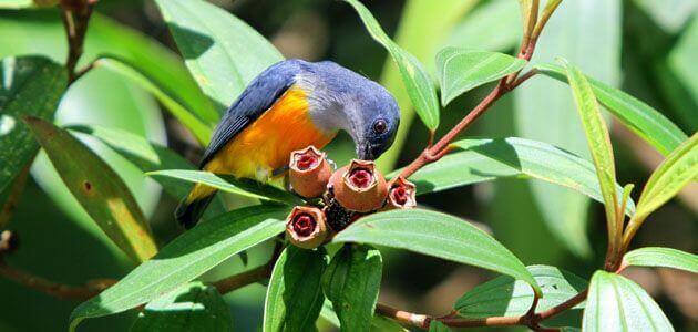 أسماء طيور جميلة ومعانيها