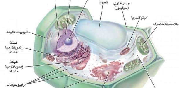 بحث عن الخلية النباتية ومكوناتها